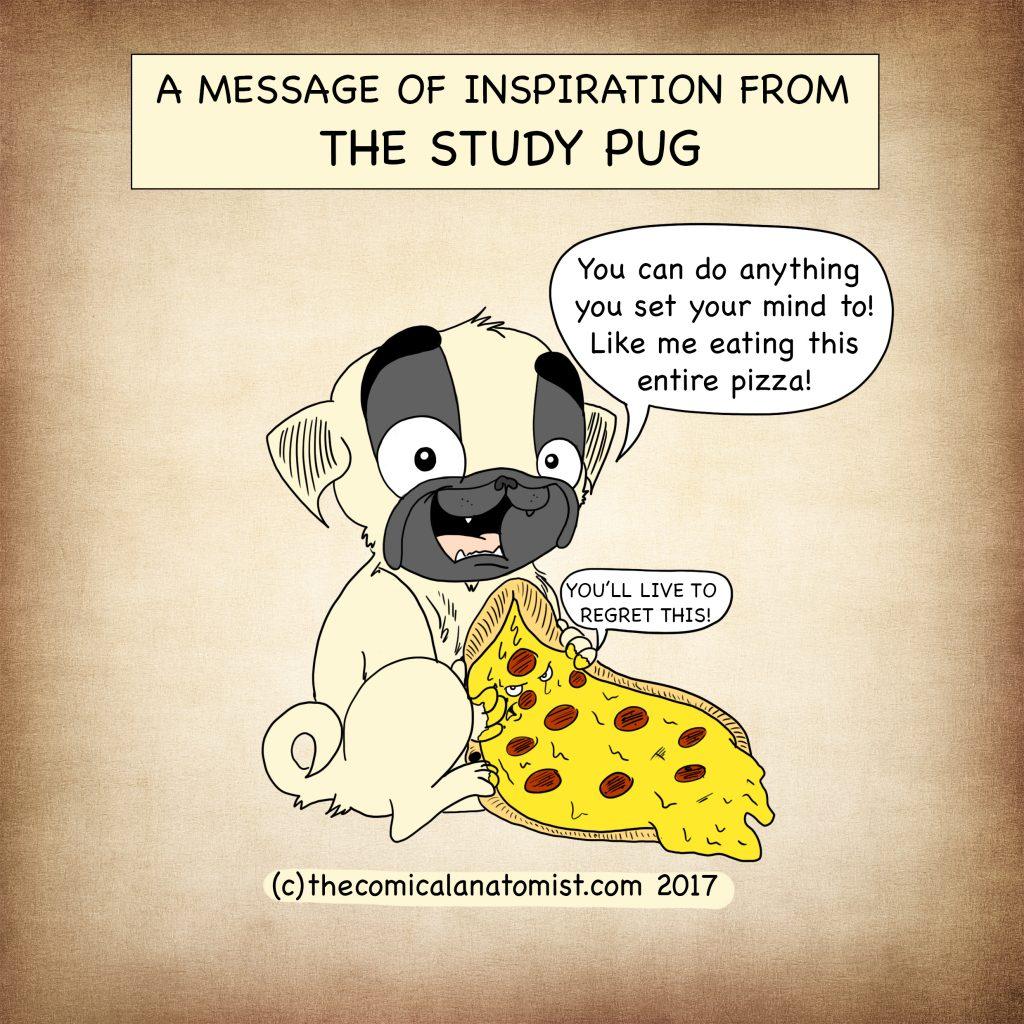 The study pug!