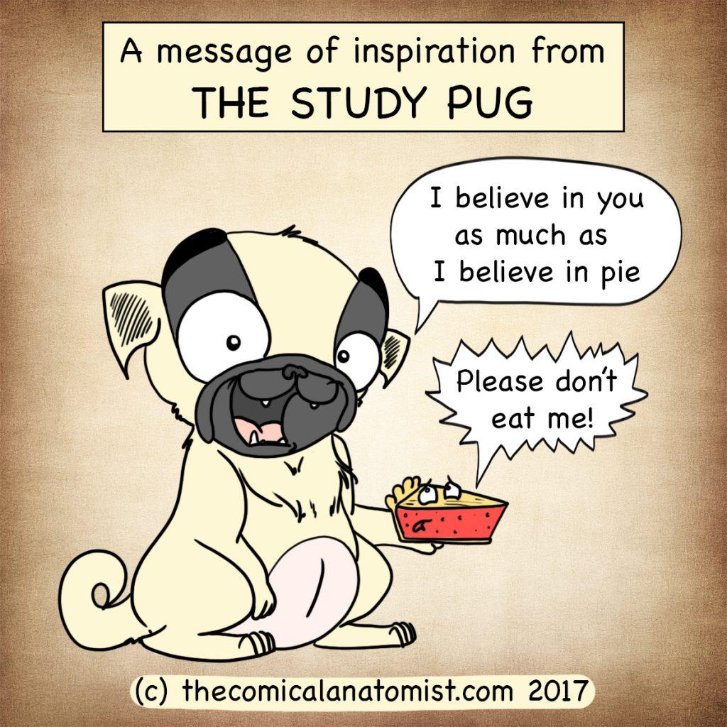 Study pug